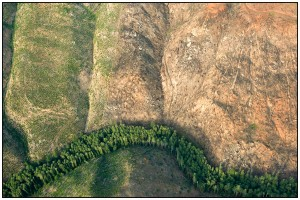 Narrow streamside buffer surrounded by clearcut logging in the Oregon Coast Range (Tim Giraudier)