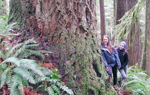 Elliott rainforest (photo by Cascadia Wildlands)