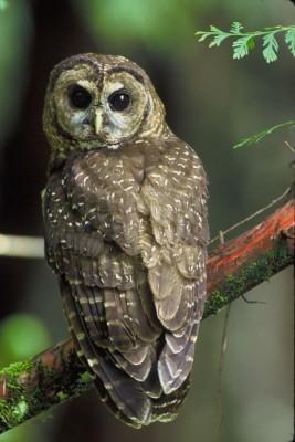 owl_photo