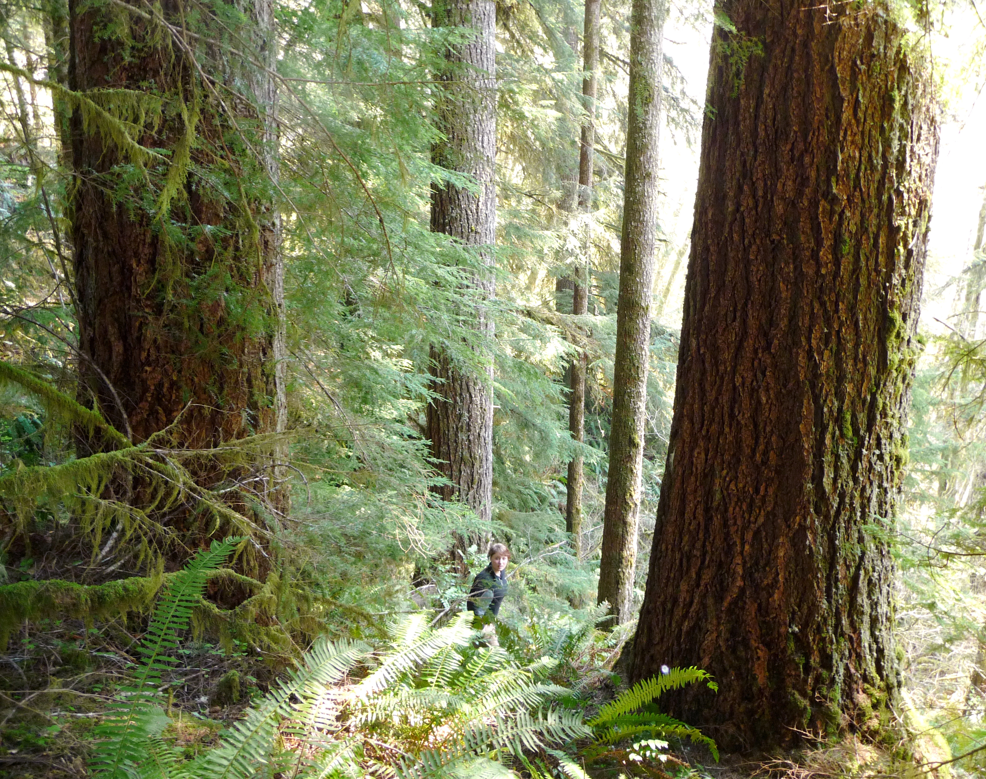 Battle for the Elliott State Forest Won!  Land Board Votes to Keep Forest Public!