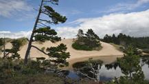 Oregon Dunes (k ritley)