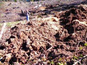 Buck Rising Landslide