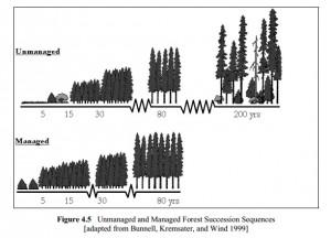 NCASI Report Tree Illustration