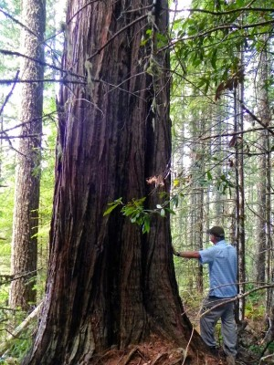 Bob and Incense Cedar