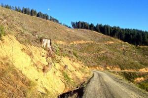 Myrtle Creek Clearcut