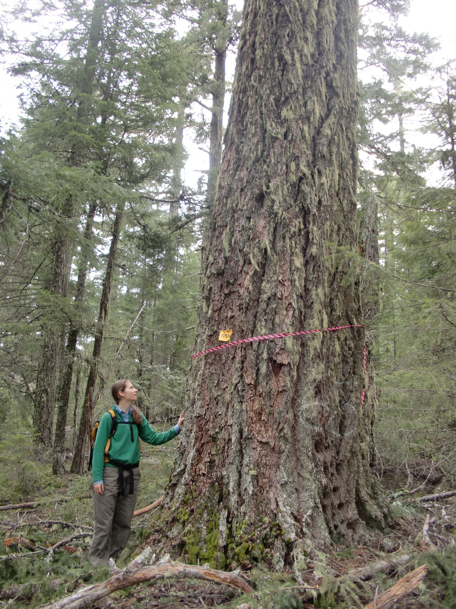 Suit Filed to Prevent Old-Growth Logging Near Rogue River