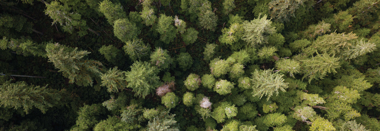 Oregon Coastal Forest (photo by Andrew Kumler)