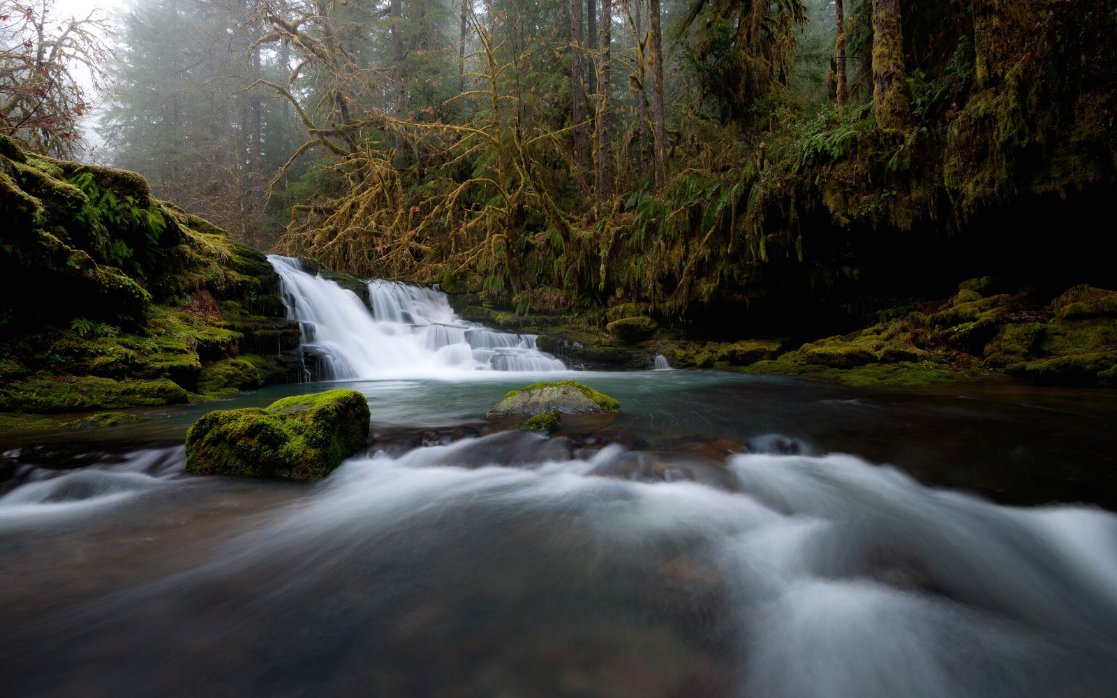 Oregon Board of Forestry Grants Petition to Protect Coho Salmon from Private and State Logging