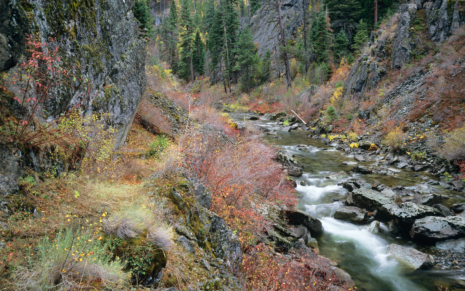 Oregon Board of Forestry Petitioned to Develop Coho Salmon Protections