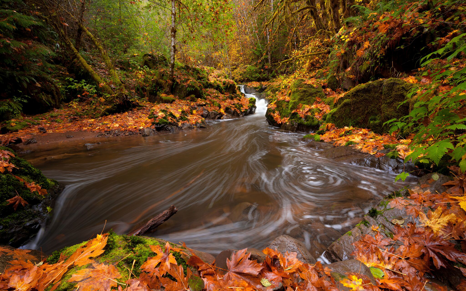 Press Release: Oregon Court Rules Sale of Elliott State Forest Tract Illegal