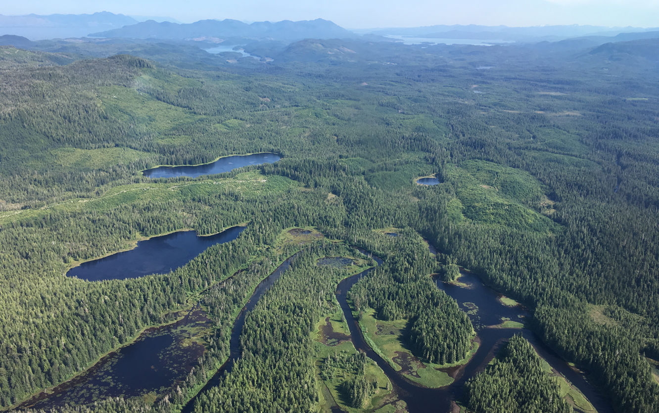 Press Release: 9th Circuit Voids Old-Growth Timber Sales on the Tongass