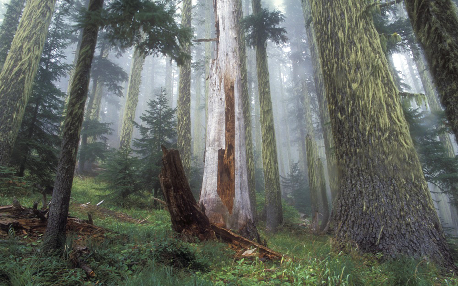 Demand that the Oregon Department of Forestry Do Better!