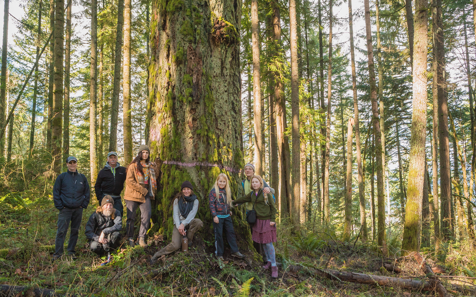 BLM is Back at it! Help Halt Thurston Hills Timber Sale