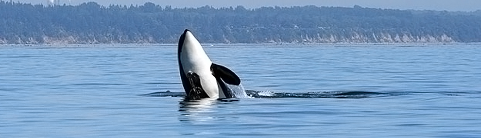 Your Help Needed: Protect Rivers, Salmon, and Orcas!