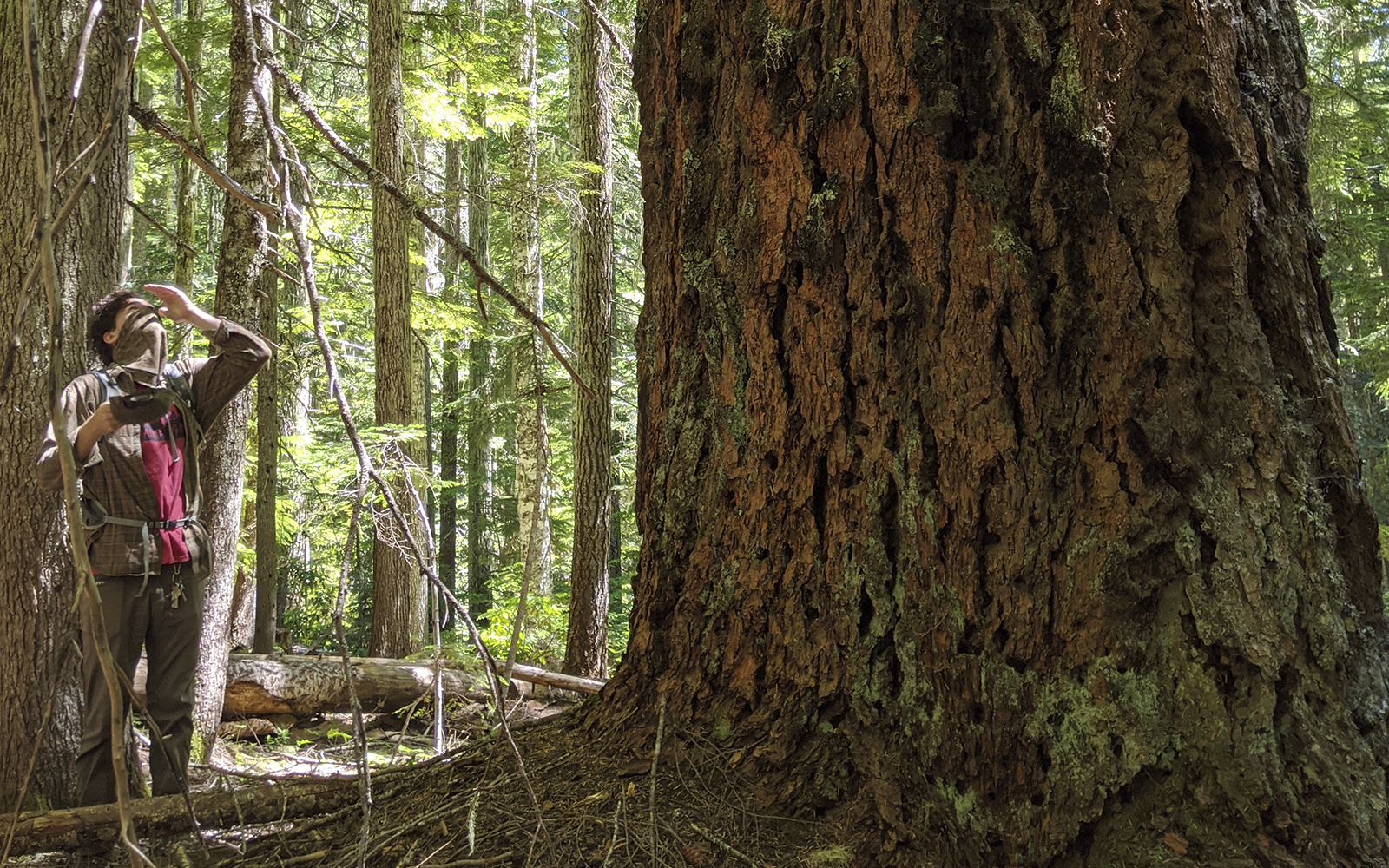 FIELD REPORT / BLOG: Quartzville-Middle Santiam Old-Growth on the Chopping Block