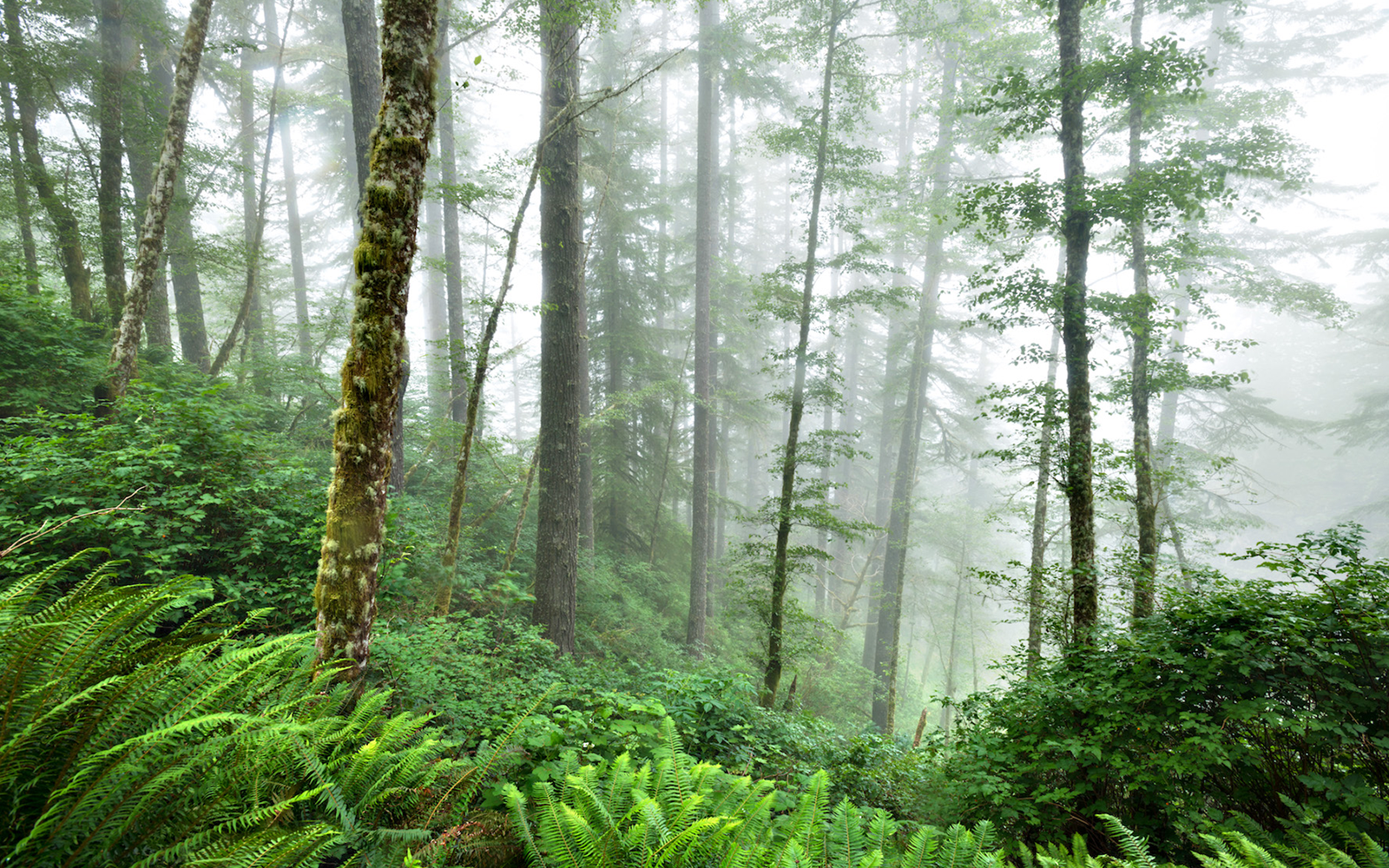 Your Voice is Needed to Help the Elliott State Forest
