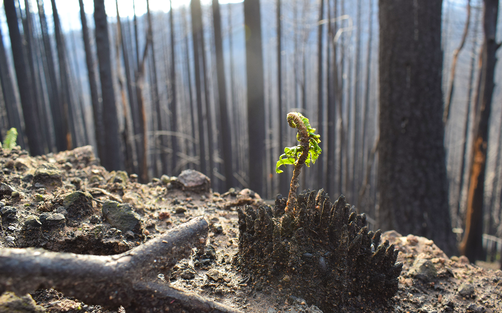 Stop Post-Fire Logging in the North Umpqua River Watershed!