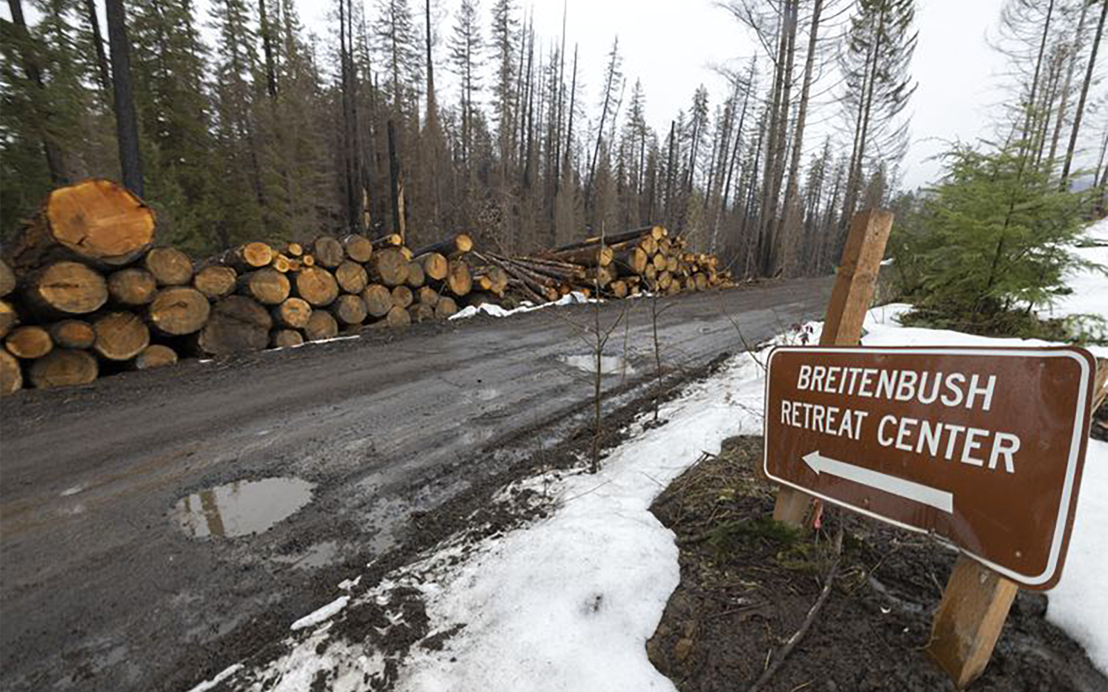 Post-wildfire logging is moving fast, raising environmental concerns