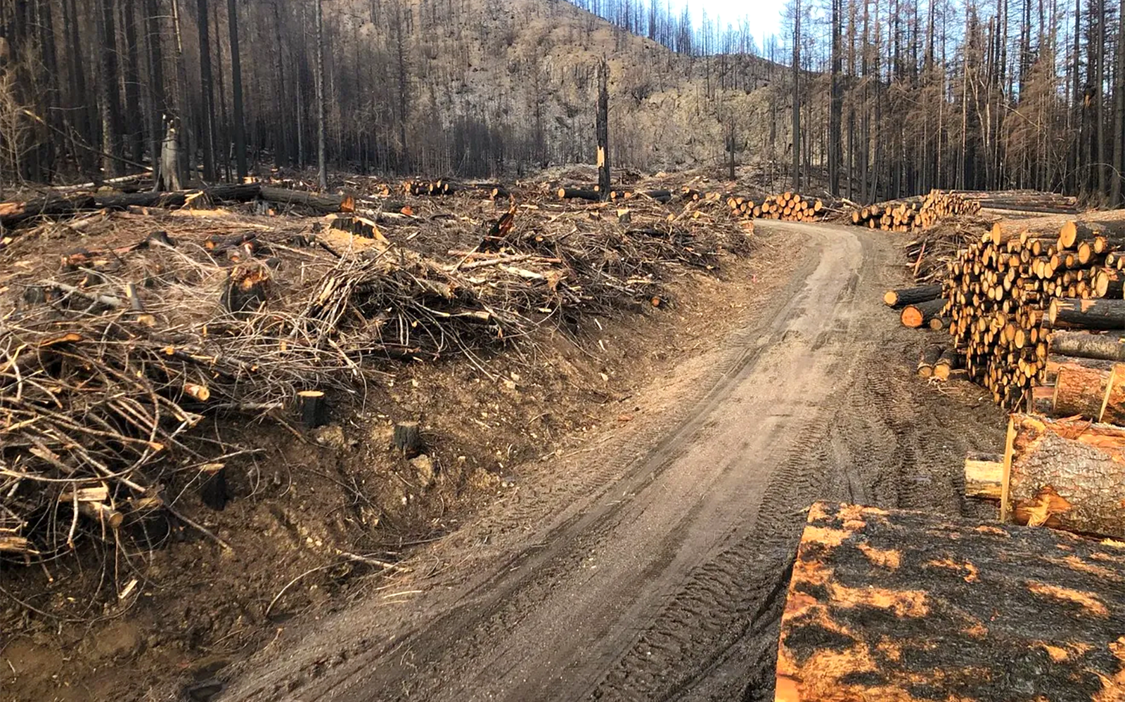 A Call on Secretaries Haaland and Vilsack to Rein in Reckless Post-Fire Roadside Logging in Oregon