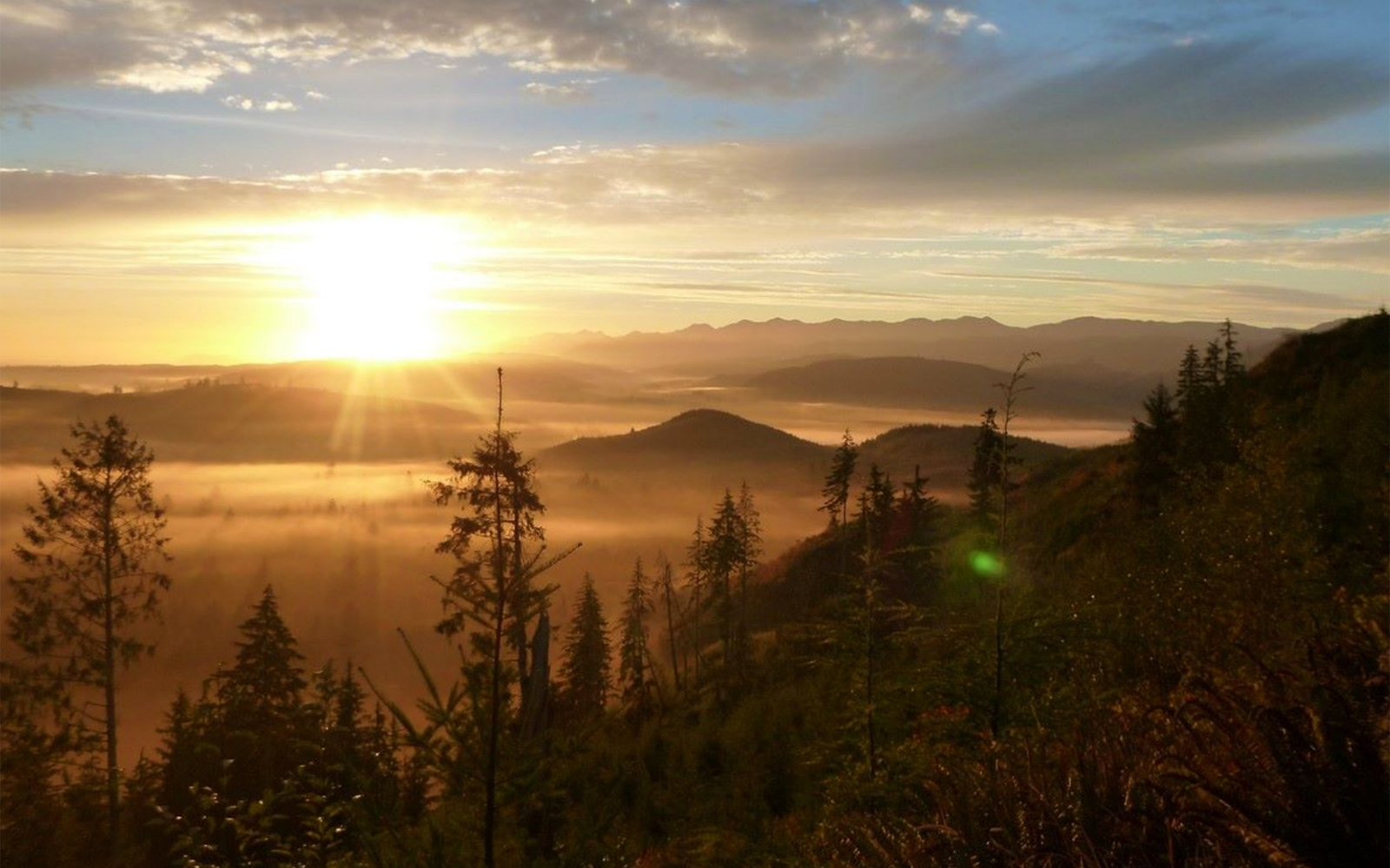 Protect Washington's Legacy Forests from Clearcut Logging