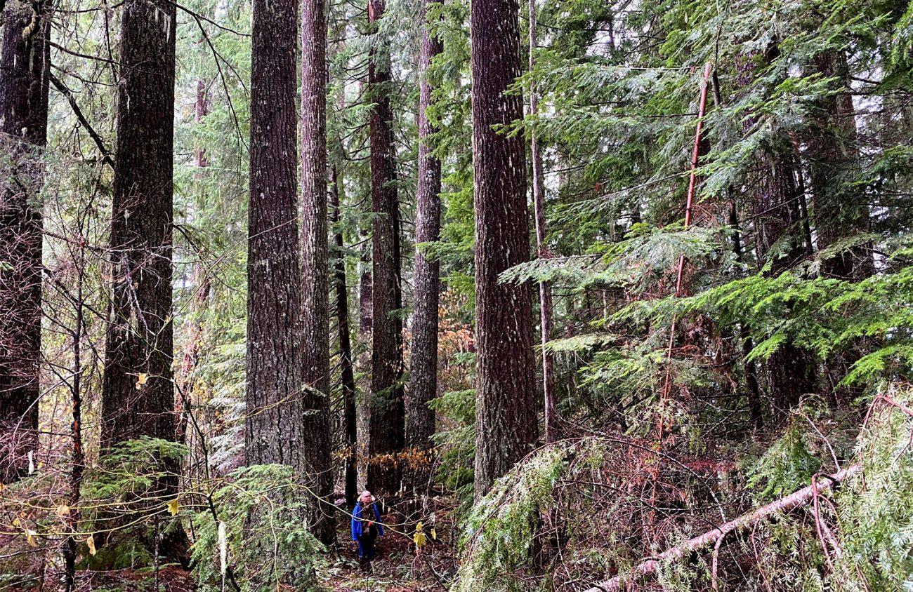 Flattening a Forest