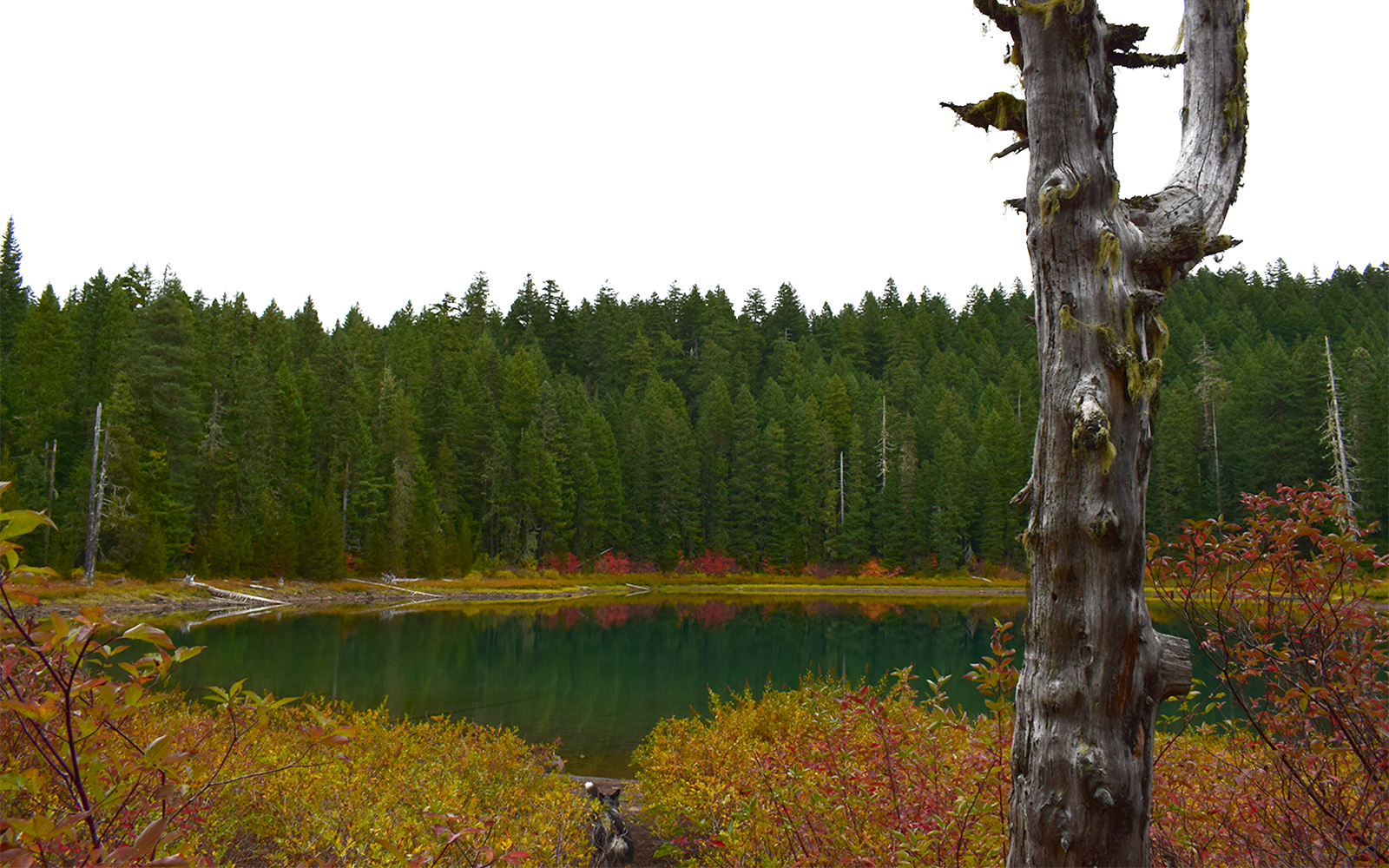 Protect older natural forests in the western Cascades