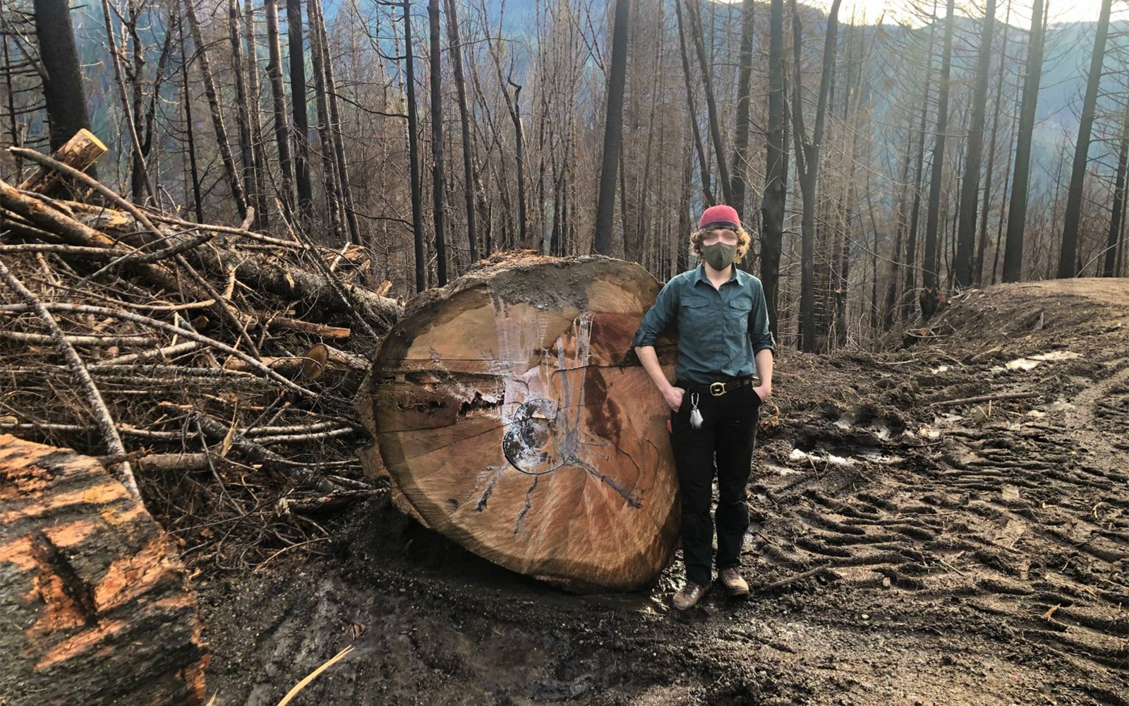 Salvage does not aid ecological recovery of forests