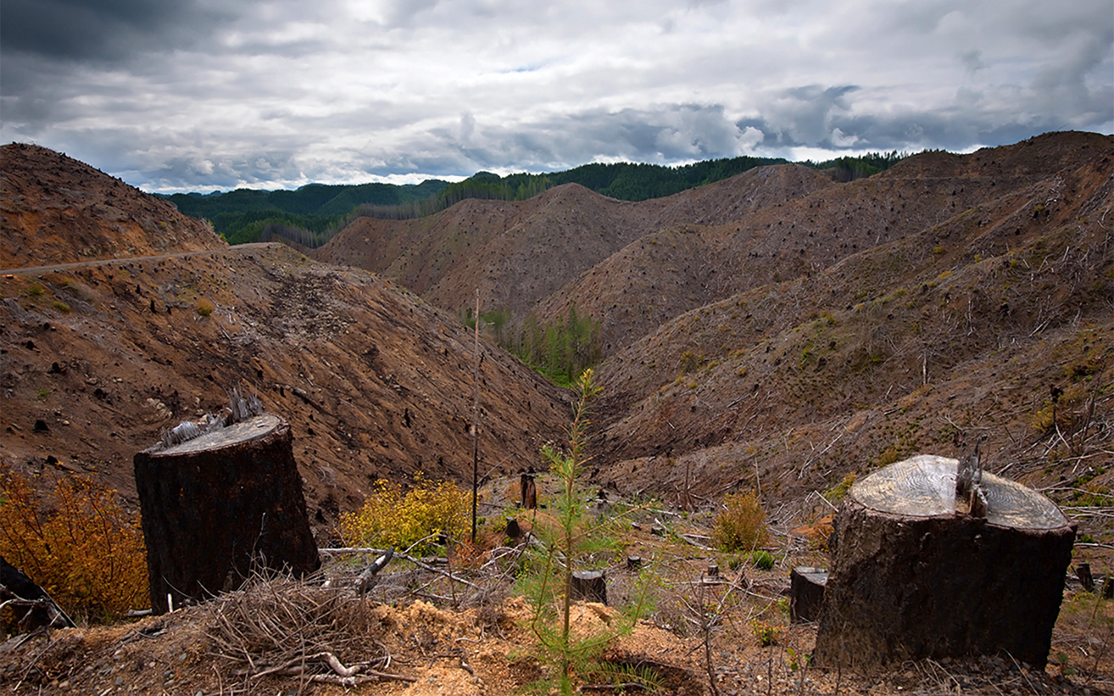 It's Time to Reform Oregon Forest Stewardship with HB 2357
