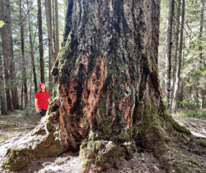 A nearly 7-foot diameter old-growth Douglas fir in a proposed Roseburg BLM LSR Enhancement Project unit (photo by Francis Eatherington).