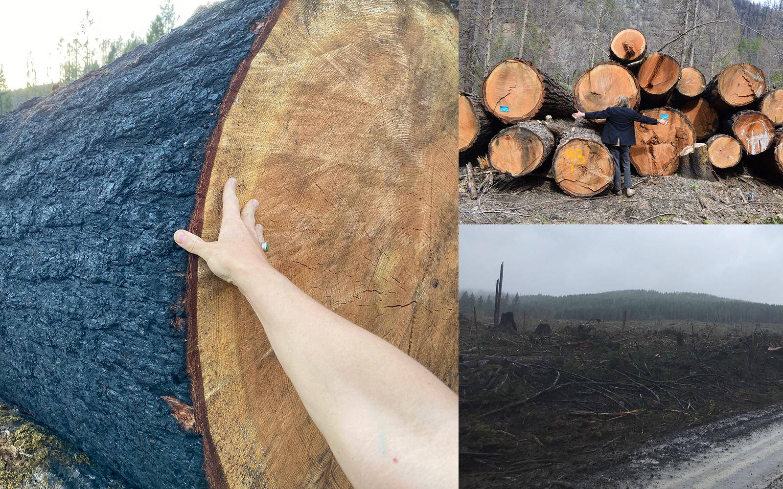Press Release: CW Appeals ODOT's $87,000 Bill for Post-Fire Hazard Tree Removal Public Records Request