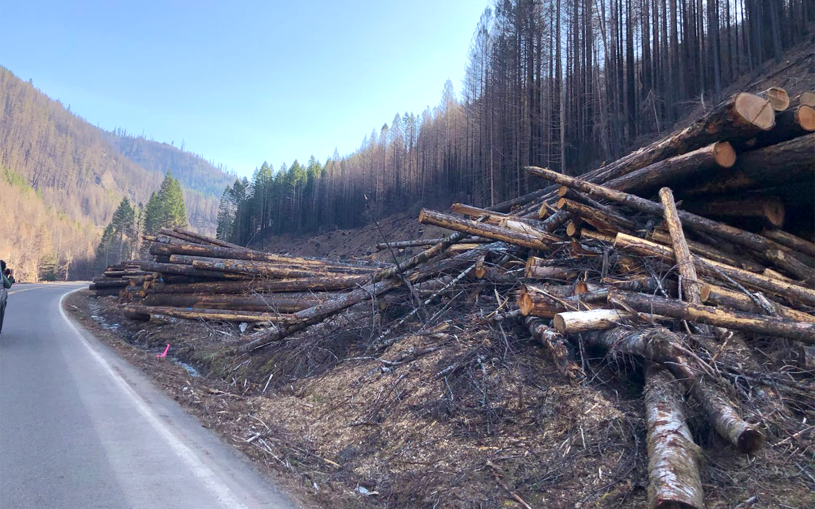 Environmental groups sue over post-wildfire roadside logging plans