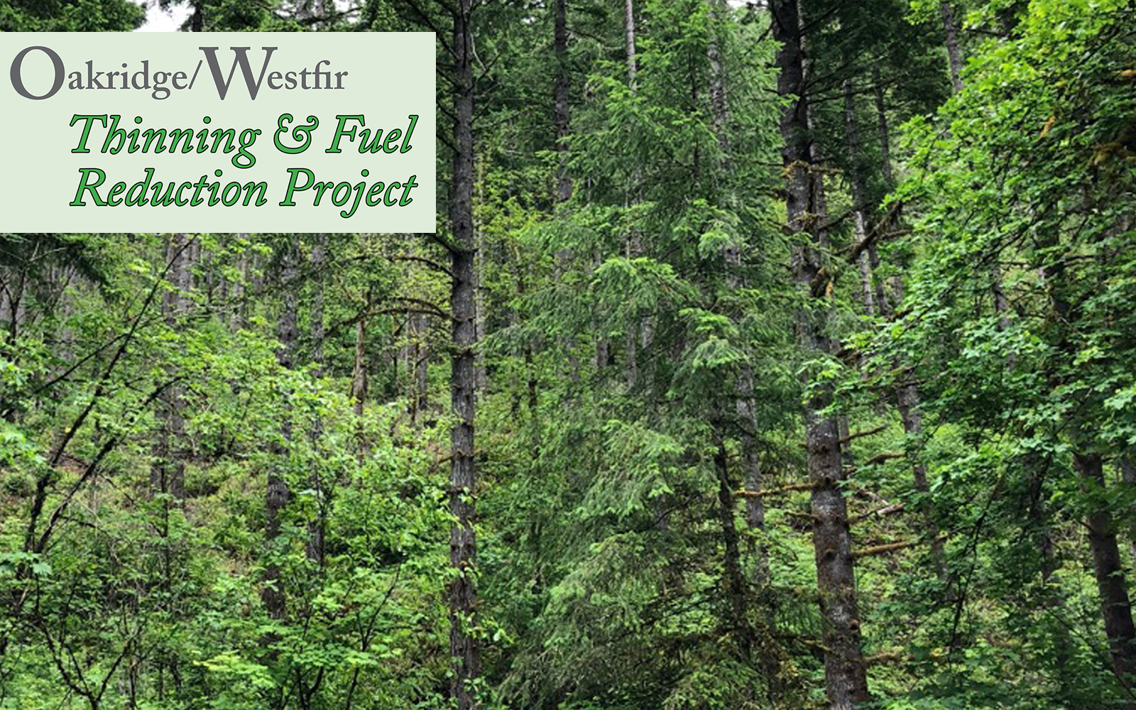 BLOG: Reporting Back from the Oakridge/Westfir Field Visit