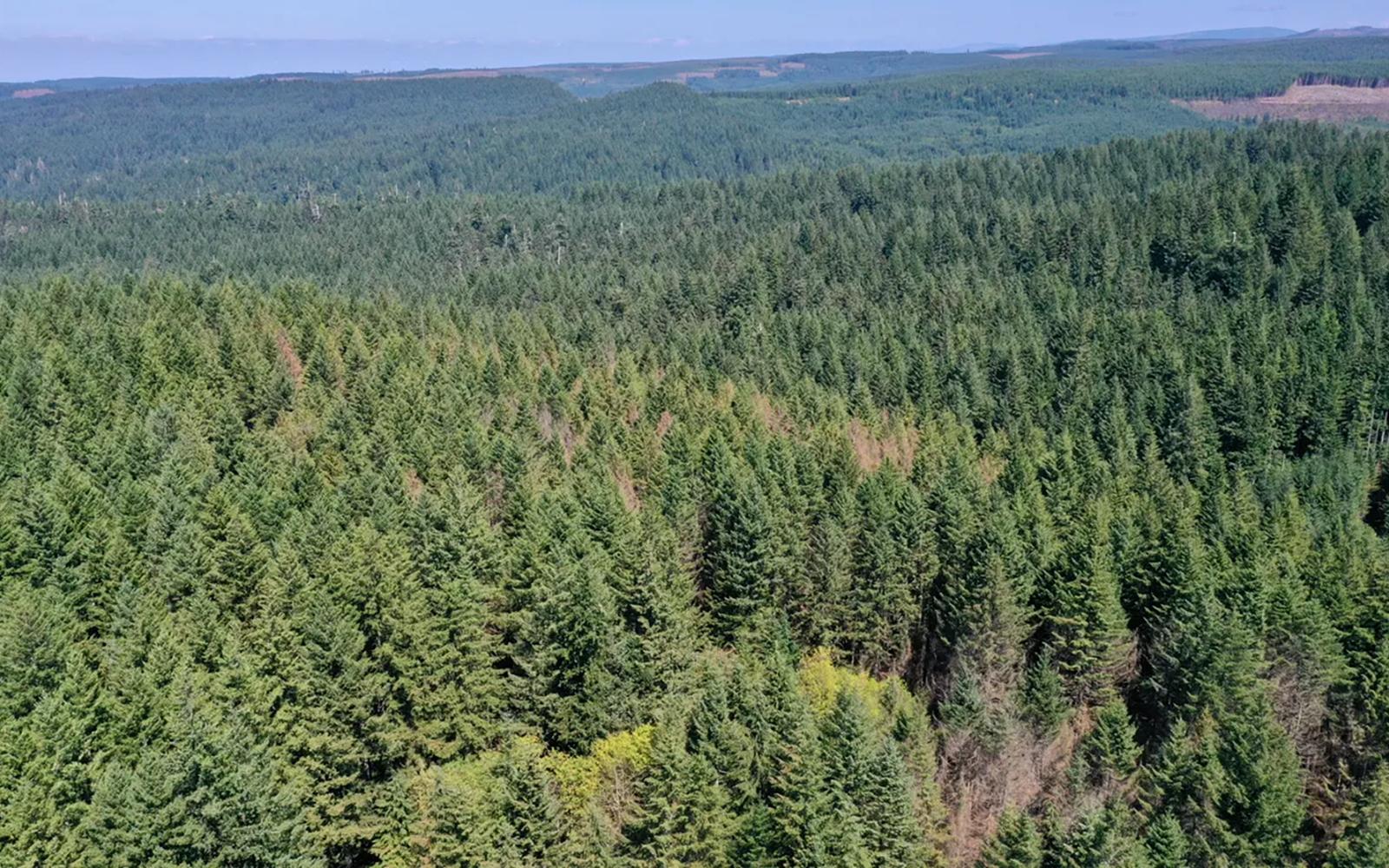 TAKE ACTION: Help Halt Active Logging in Oregon's Silver Falls State Park